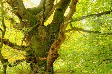Bilder mit Bäume