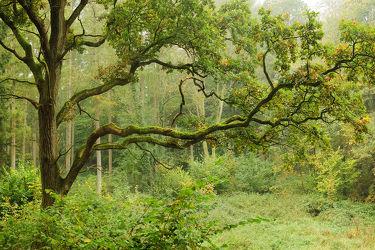 Bild mit Bäume,Wald,Baum,Sonnenlicht,Moose
