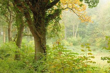 Bild mit Bäume,Sträucher,Nebel,Sonne,Wald,Lichtung,Sonnenlicht,Sonnenlicht,Schatten,Dunst