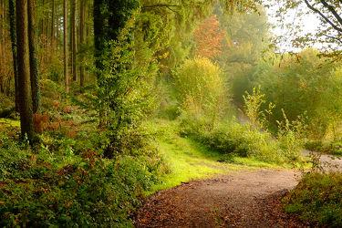 Bild mit Bäume,Herbst,Sträucher,Sonne,Wald,Sonnenlicht,Sonnenlicht,Wandern,Ausspannen,Schatten