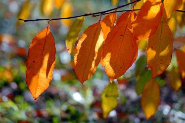 Bild mit Bäume,Parks,Herbst,Blätter,Bunt,garten,FARBE,farbig