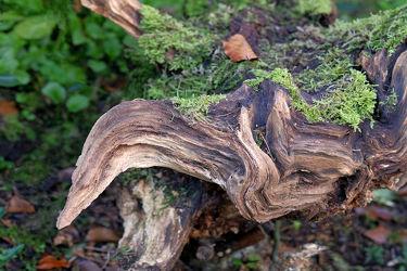 Bild mit Bäume,Wald,Blätter,Waldboden,Moos,Leben,Zusammenleben,Baumstumpf