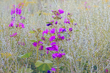 Bild mit Pflanzen,Blumen,Blumen,Lila,Herbst,Sommer,Tapete,WOHNEN,Silber,Wandbehang,Blumenfeld