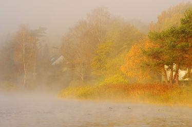 Bild mit Bäume,Gewässer,Sonnenaufgang,Nebel,See,Winterzeit,Ausspannen,Geniessen,Seenebel,Idylle,Ufer,Dunst,Morgens,Früh