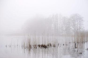 Bild mit Bäume,Winter,Gewässer,Herbst,Nebel,See,Ruhe,Winterzeit,Stille,Erholung,Ausspannen,reet,Dunst,Morgenstille