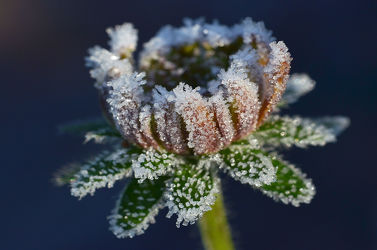 Bild mit Winter,Blumen,Herbst,Makro,Winterzeit,nahaufnahme,Eiskristalle