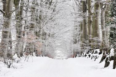 Bild mit Bäume,Winter,Schnee,Blätter,Alleen,Winterzeit,Raureif