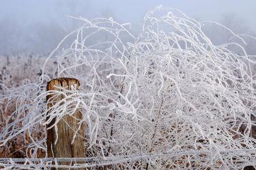 Bild mit Pflanzen,Winter,Weiß,Nebel,Felder,Winterzeit,Wiesen,Raureif,Dunst,Pfähle,Pfahl,Sonnenblumenfeld