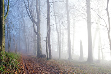 Bild mit Bäume,Winter,Winter,Herbst,Nebel,Wald,Blätter,Wanderweg,Herbstblätter,Winterzeit,Sonnenlicht,Moos,Spätherbst,Nebelschwaden,Schneelos