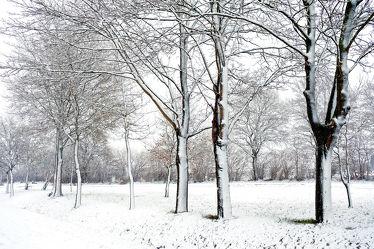 Bild mit Bäume,Winter,Schnee,Felder,Winterzeit,Winterzeit,Kälte,Wärme,Idylle,Nässe,Rarität,Wetterumschwung,Winteridylle