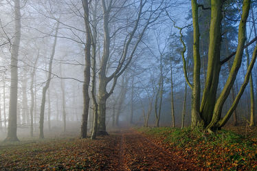 Bild mit Farben,Natur,Grün,Bäume,Winter,Blau,Dunkelheit,Nebel,Sonne,Braun,Wald,Winterzeit,Zweifarbig,Orginalfarben,Hellgrau,Orginal