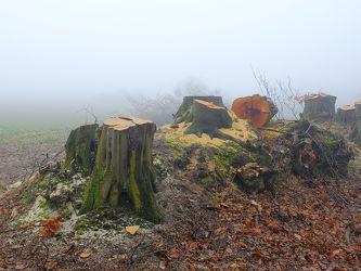 Bild mit Bäume,Winter,Wetter,Herbst,Nebel,Winterzeit,Kälte,Spätherbst,Baumstümpfe,Haine,Wurzeln,Knicks,ökologie,Schnitte,Wärmee,Wetterwechsel,Orginalbild