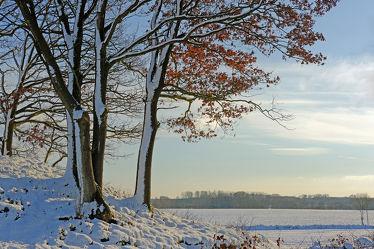 Bild mit Bäume,Schnee,Landschaft,Gegenlicht,Winterzeit,Abendlicht