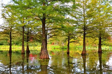 Bild mit Wasser,Landschaften,Bäume,Gewässer,Sommer,See,Park,Ufer