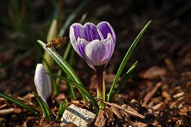Bild mit Blumen, Insekten, Bienen, Licht, Wärme, Morgensonne, Morgens, Strahlen, Temperatur