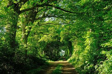 Bild mit Grün,Bäume,Frühling,Sträucher,Weg,Allee,Erholung,Sonnenlicht,Ausspannen,Laubengang,Ziel,Durchgang