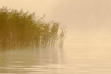 Bild mit Gewässer,Seen,Sonnenaufgang,Nebel,Schilf,Entspannen,Ausspannen,Ausspannen,Seenebel,Idylle,Dunst,Morgengrauen,Schimmern