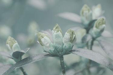Bild mit Blüten, Entspannen, Ausspannen, Wellnes, Azalleen