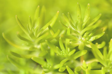 Bild mit Grün,Grün,Dickfleischpflanze,Einfarbig