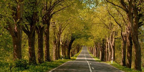 Bild mit Bäume,Herbst,Licht,Sonnenlicht,Verkehr,baumallee,Rügen,Schatten,Spätsommer,Strassen,Herbstanfang