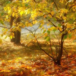 Bild mit Herbst, Sträucher, Blätter, Gegenlicht, leuchtend, Sonnenlicht, Ausspannen, Idylle