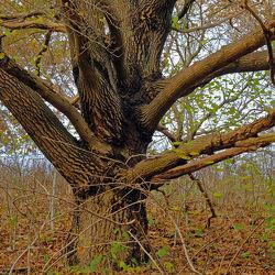 Bild mit Natur, Baum, Naturaufnahmen, alt, Knorrig