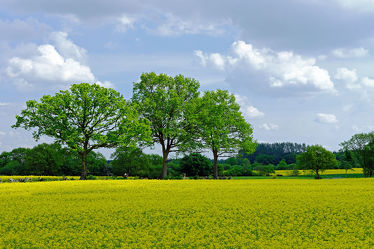 Bild mit Gelb, Grün, Himmel, Bäume, Wolken, Weiß, Blau, Sonne, Raps, Landschaft, Schatten, Haine, Knicks, Schleswig, Holstein, lichtstrahlen
