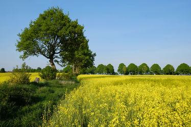 Bild mit Gelb, Grün, Pflanzen, Gräser, Himmel, Bäume, Wolken, Blau, Sonne, Raps, Landschaft, Gras, Haine, Knicks, Schleswig, Holstein