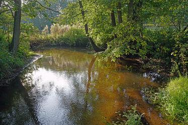 Bild mit Wasser, Bäume, Wald, Blätter, Waldrand, Bach, Sonnenlicht, Sandboden, Moorig