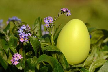Bild mit Gelb, Grün, Blumen, Parks, Lila, Blätter, Ostern, garten, Bodendecker, Bodendecker, Ei, Blaublühend, Osterei, Vergissmeinnicht
