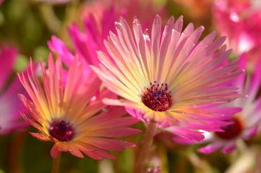 Bild mit Blumen, Sonne, Blume, Blüten, garten, blüte, FARBE, farbig, Freude, Bauerngärten, Mittagsblumen