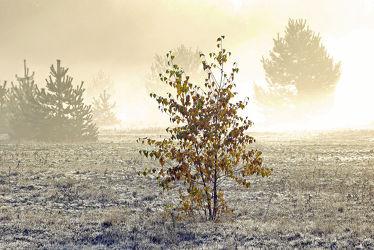 Bild mit Bäume, Winter, Nebel, Sonne, Gegenlicht, Kälte, Frost, Idylle, Raureif, Dunst, Ostfriese, Morgenlicht, Nebelwand, Umrisse