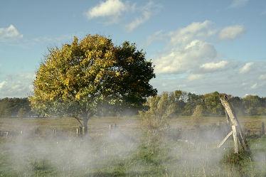Bild mit Herbst, Nebel, Sonne, Baum, Zaun
