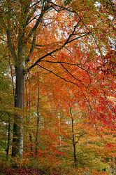 Bild mit Herbst, Ausspannen