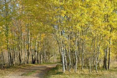 Bild mit Bäume, Birken, Wanderweg, Wandern, Ausspannen, Birkenhain, Schutzzaun