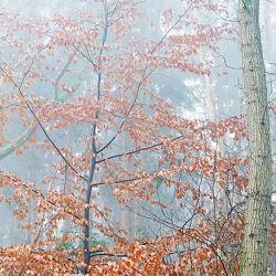 Bild mit Bäume, Herbst, Nebel, Kälte, Wipfeln