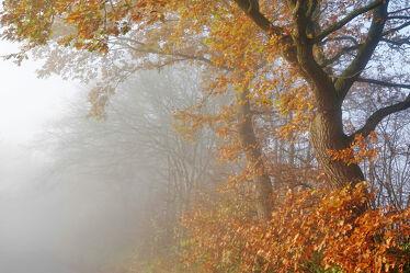 Bild mit Bäume, Winter, Sonnenaufgang, Braun, Blätter, Buchen, Ausspannen, Geniessen, Wintermorgen
