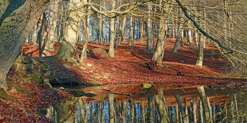 Bild mit Wasser, Bäume, Winter, Gewässer, Herbst, Wald, Bach, Buchen