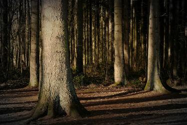 Bild mit Bäume, Herbst, Wald, Sonnenschein, Abendlicht, Dunst, Herbstwald, stämme