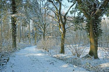 Bild mit Bäume, Winter, Winter, Schnee, Sonne, Wald, Spaziergang, Erholung, Ausspannen, efeu, Mittagssonne, Waldlauf