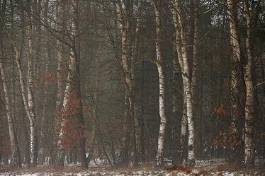 Bild mit Birken, Wald, Unterholz, Ökowald