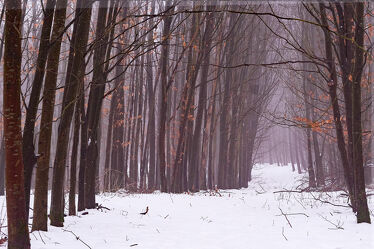 Bild mit Winter, Schnee, Nebel, Buchen, Dunst, Aufforstung, Neuanlage