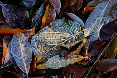 Bild mit Gräser, Winter, Sonnenaufgang, Blätter, Makro, nahaufnahme, Kälte, Frost, Raureif