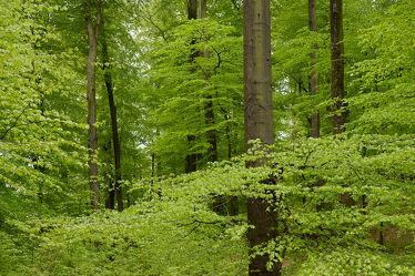 Bild mit Grün, Bäume, Frühling, Blätter, Laubwälder, Erholung, Wandern, Ausspannen