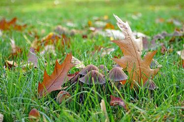 Bild mit Gräser, Parks, Sonne, Blätter, Licht, Pilze, garten, Wiesen, Schatten, helligkeit