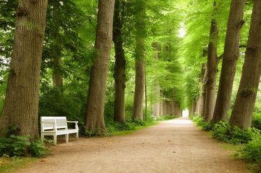 Bild mit Bäume, Sommer, Allee, Wandern, Ausspannen, Eutin