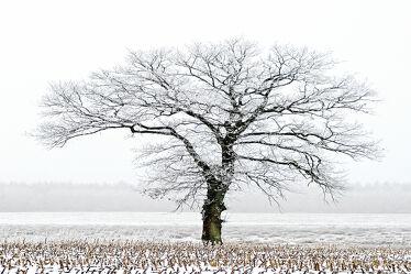 Bild mit Winter, Baum, Gegenlicht, Felder, Kälte, Frost, Wiesen, Idylle, Stoppelfeld, Rauhreif