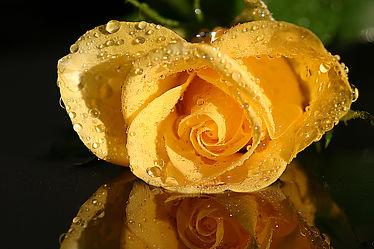Bild mit Blumen, Rosen, Blume, Rose, Blüten, Kleine Kunst, blüte