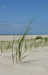 Bild mit Urlaub, Sonne, Strand, Meer, Düne, Gras, Dünengras, Erholung