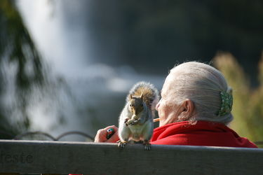 Eichhörnchen mit alter Dame auf Bank